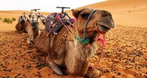 Pigus skrydis į Maroką!