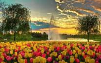 Gėlių paradas Olandijoje