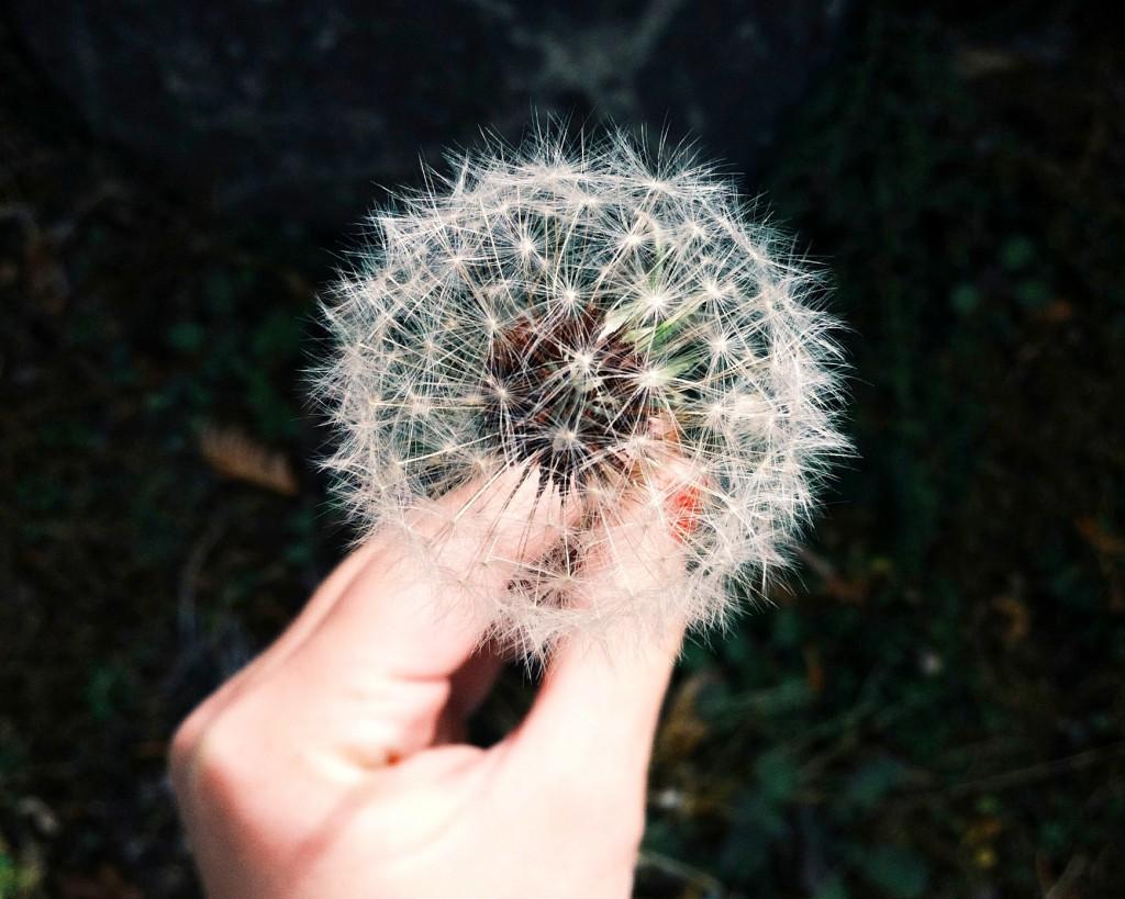 kaip rasti svajoniu darba